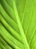 Fresh Green Leaf. A macro shot of a fresh green leaf Stock Photos