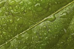Fresh green leaf Stock Photo