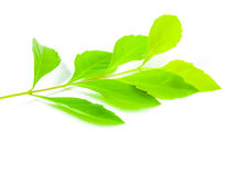 Fresh green leaf   Stock Photos