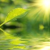 Fresh green leaf stock image