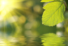 Fresh green leaf stock photography