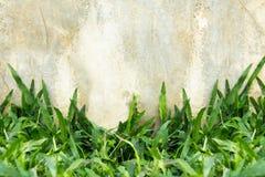 Fresh green leaf against grunge concrete. Stock Photos