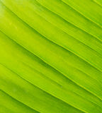 Fresh green leaf as background Stock Photos