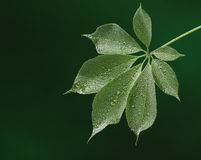 Fresh green leaf royalty free stock images