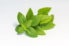 Fresh green leaf basil. Isolated on white background stock images
