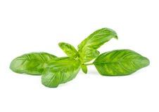 Fresh green leaf basil. Isolated on white background Royalty Free Stock Photo