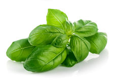 Fresh green leaf basil Stock Image