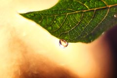 Fresh green leaf with big macro drop and bokeh background royalty free stock photos