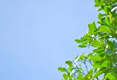 Fresh green leaf and blue sky Stock Photos