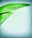 Fresh green leaf border Stock Photos