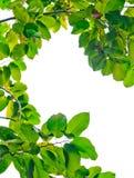 Fresh green leaf frame Royalty Free Stock Photos