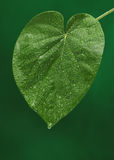 Fresh green leaf on green background stock photo