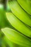 Fresh green leaf with green bokeh, close up Royalty Free Stock Image
