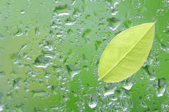 Fresh green leaf on green rain. Background Stock Image
