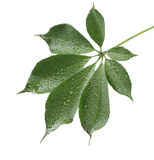 Fresh green leaf isolated on white stock images