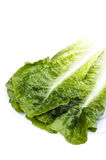 Fresh green leaf lettuce separately from racemes. On a white background Royalty Free Stock Image