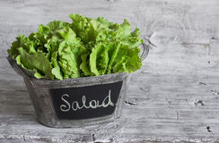 Fresh green leaf lettuce in a vintage bucket Stock Photography