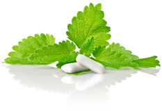 Fresh green leaf of melissa with chewing gum Stock Photo