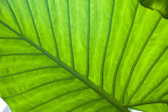 Fresh green leaf nature background. S Stock Photos
