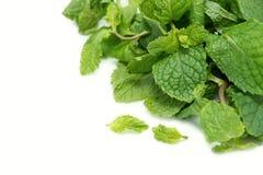 Fresh green leaf of pepermint Stock Photo