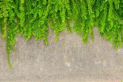 Fresh green leaf plant on grunge wall background. stock image