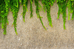Free Fresh Green Leaf Plant On Grunge Wall Background. Royalty Free Stock Image - 37888096