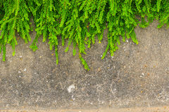 Free Fresh Green Leaf Plant On Grunge Wall Background. Royalty Free Stock Photos - 37888398