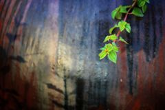 Fresh green leaf on the side of the flowerpot. In the morning royalty free stock photo