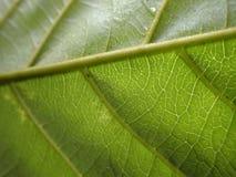 Fresh green leaf texture macro close-up Stock Photo
