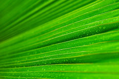 Fresh green leaf water drop. As background Stock Photo