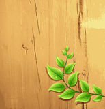 Fresh green leaf on wood background Royalty Free Stock Photo