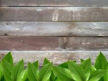 Fresh green leaf on wooden background. stock image