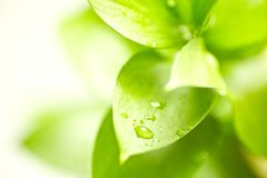 Fresh Green Leafs Stock Images