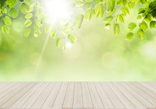 Fresh green leafs background Stock Images