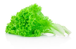 Fresh green leafs lettuce isolated on white background Royalty Free Stock Photo