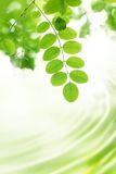 Fresh green leaves Royalty Free Stock Photos