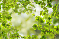 Fresh Green leaves. In forest stock photos