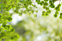 Fresh Green leaves. In forest royalty free stock photos
