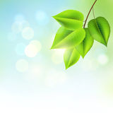Fresh Green Leaves stock illustration
