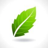 Fresh green leaves vector illustration