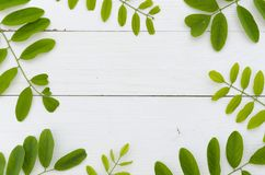 Fresh green leaves of acacia on white wooden background. Flat lay frame mockup. Fresh green leaves of acacia on brown background. wood surface royalty free stock photo