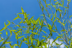 Fresh green leaves against a cloudy blue sky Royalty Free Stock Photos