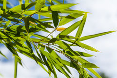 Fresh green leaves against a cloudy blue sky Stock Images
