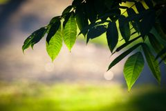 Fresh green leaves background Stock Images
