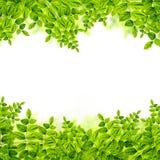 Fresh Green leaves background Stock Photo