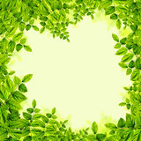 Fresh Green leaves background Royalty Free Stock Photo