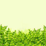 Fresh Green leaves background Stock Photos