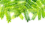 Fresh Green leaves background Royalty Free Stock Photography