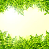 Fresh Green leaves background Royalty Free Stock Photos