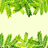 Fresh Green leaves background Stock Image